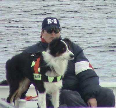 Australian Shepherd Black Tri Search And Rescue Dog Dogs Rescue