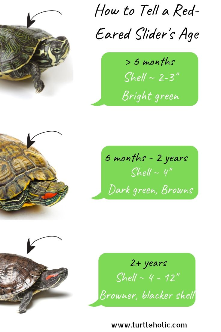 Turtleholic Clear Simplified How To Guides For Pet Turtle Owners Red Eared Slider Red Ear Turtle Pet Turtle