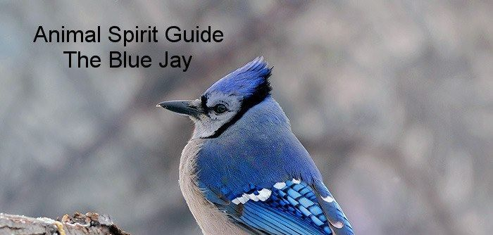 Blue Jay Meanspay Close Attention To Non Verbal Clues That Tell You