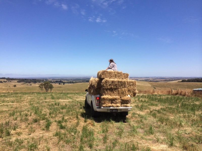 Grass Hay bales for sale Pet Products Gumtree