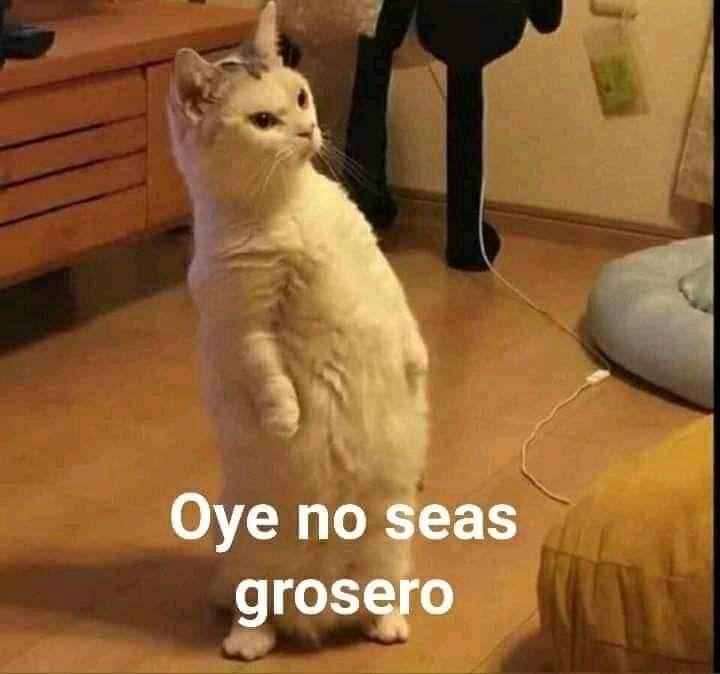 Oye No Seas Grosero En 2020 Memes Originales Memes Divertidos Memes