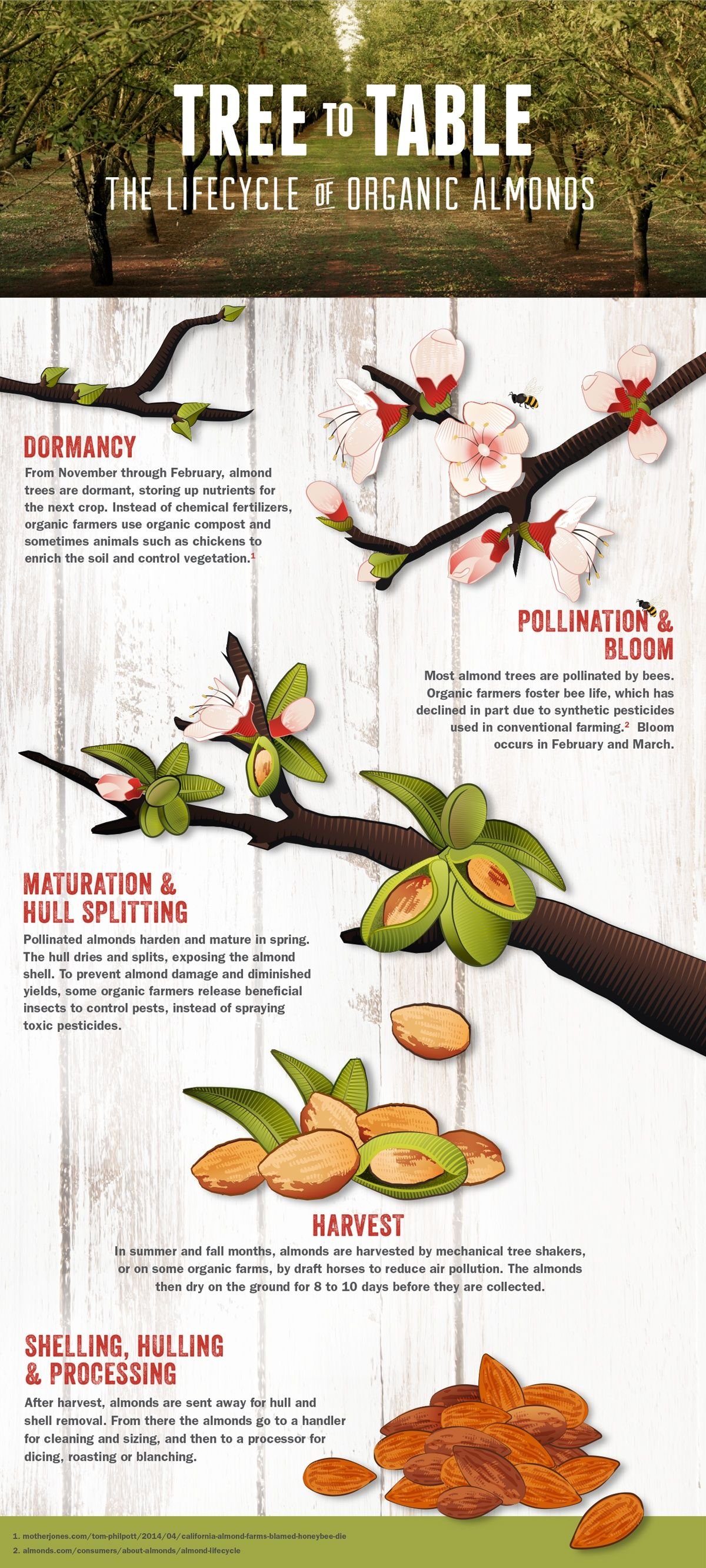 From Tree To Table Lifecycle Of Organic Almonds Lemonly Infographics Organic Compost Organic Clif Bars [ 2664 x 1200 Pixel ]