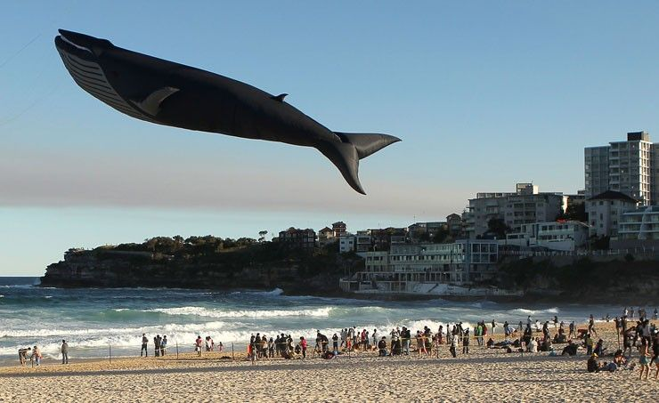 Blue Whale kite KEVIN!!!!