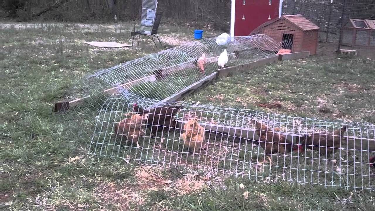 Chicken tunnel! - YouTube | backyard chickens | Pinterest | Backyard ...