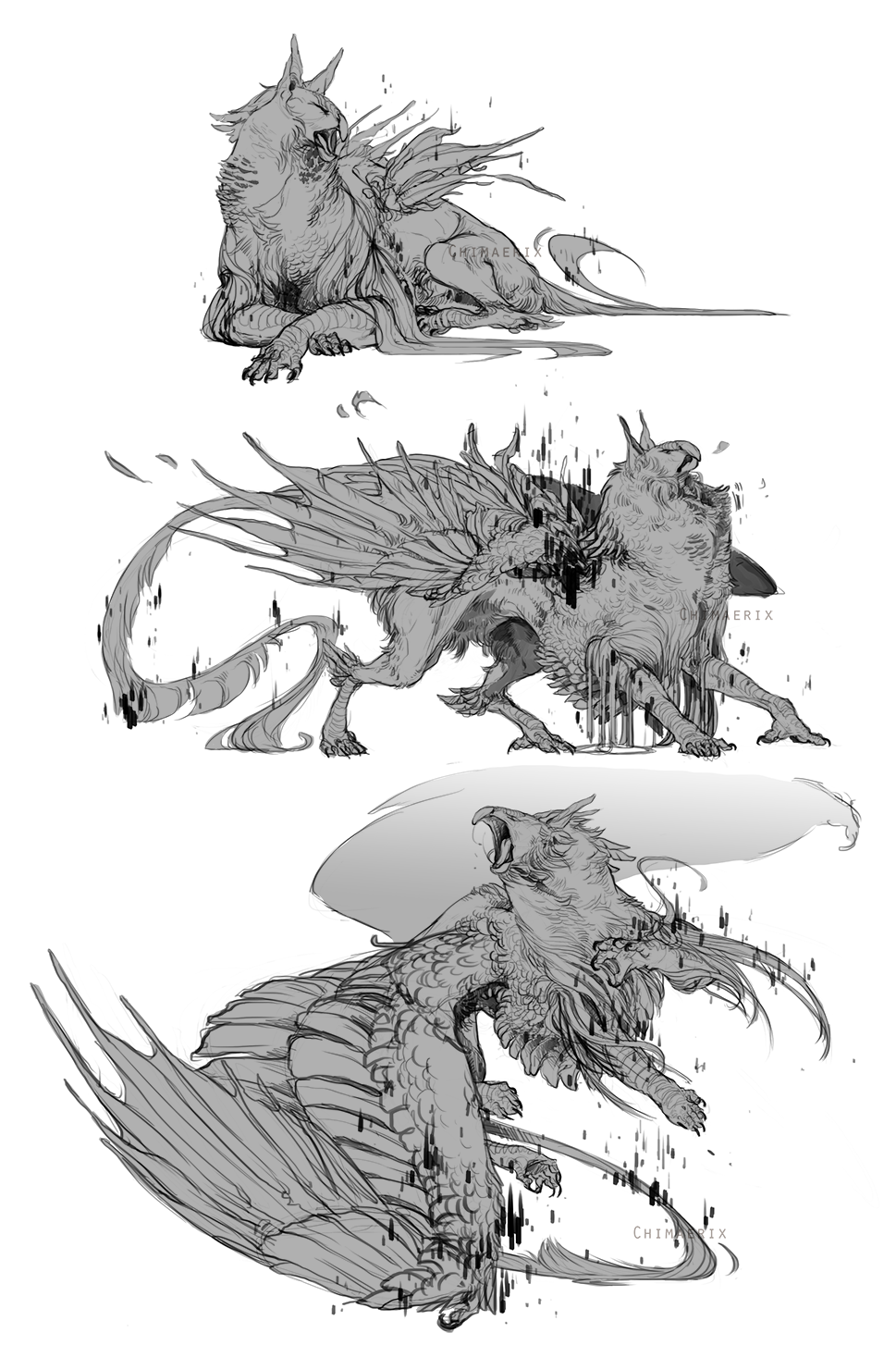 Gryphon Sketches For Sharkfu By Tawnwen Anime