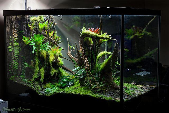 Nature Aquarium Amano, HD Png Download , Transparent Png Image - PNGitem