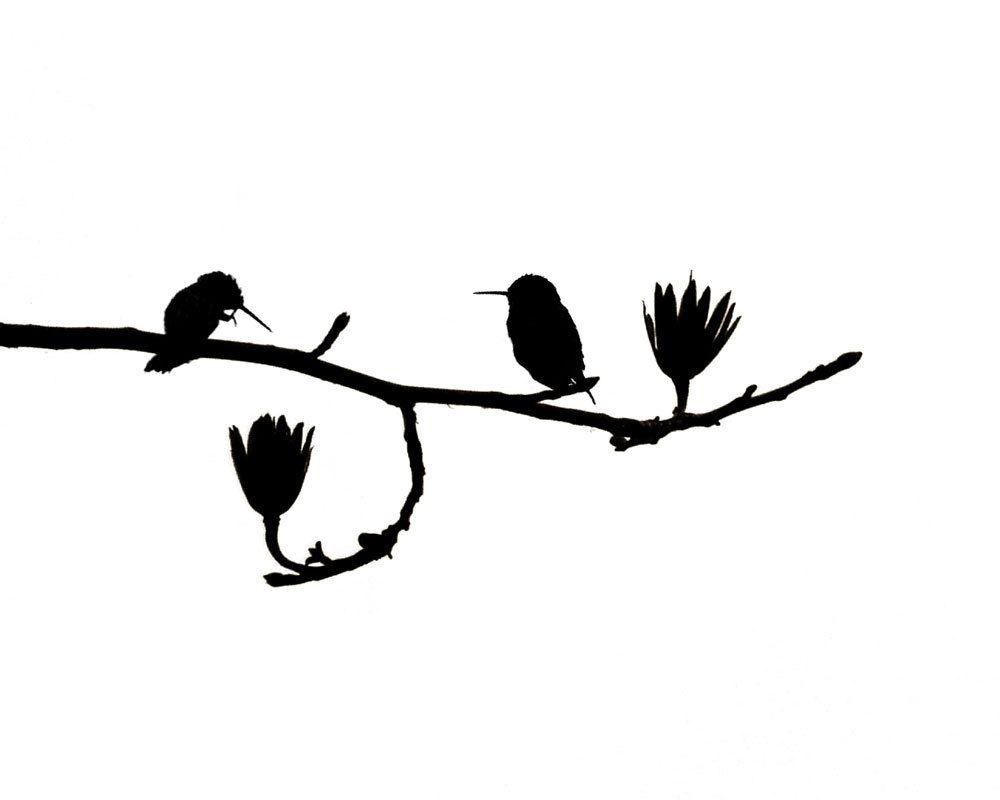 Hummingbird Art Nature Print Birds Black White Minimalist