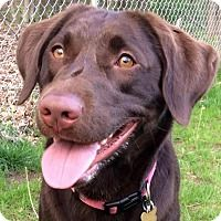 Adopt A Pet Khloe Grand Rapids Mi My Chloe S Adoption Photo Yes I Changed The Spelling It Was A Little Too K Puppy Adoption Dog Adoption Rescue Dogs