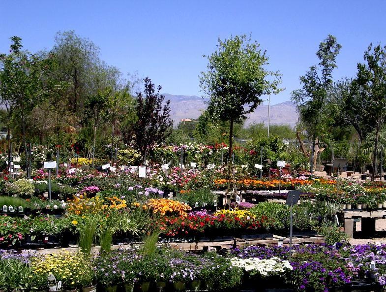 Magic Garden Nursery And Landscape Garden Nursery Garden Landscape