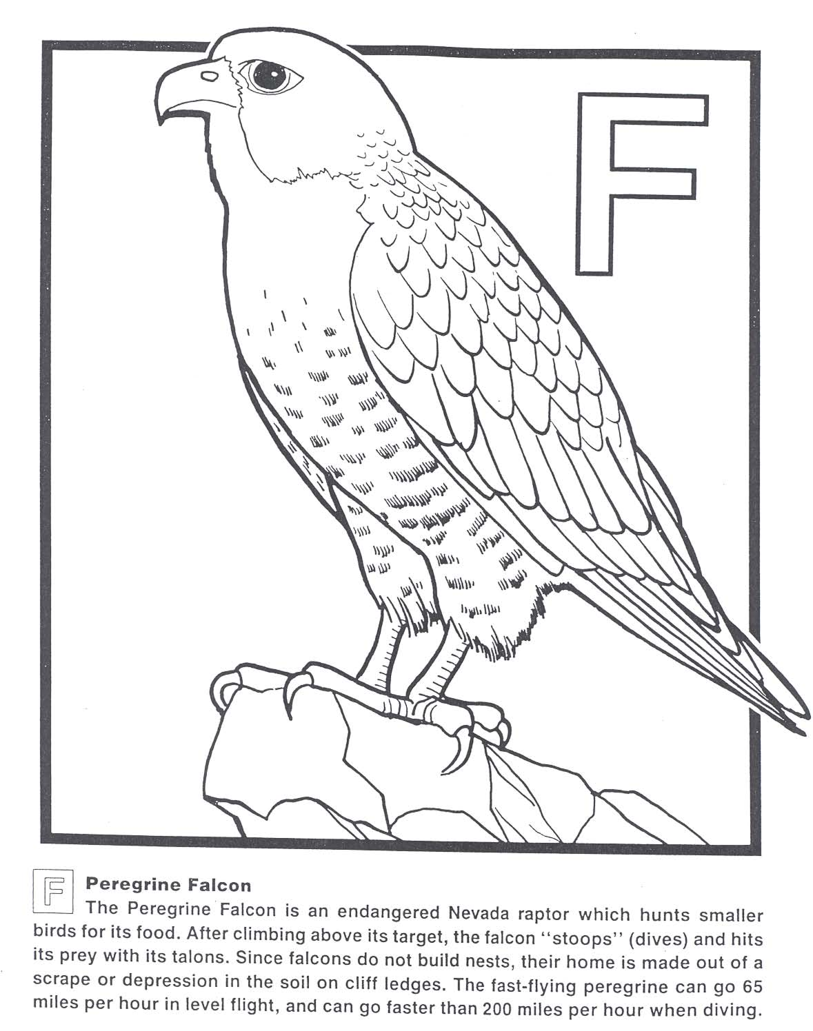 peregrine falcon coloring page how draw falcon punch page
