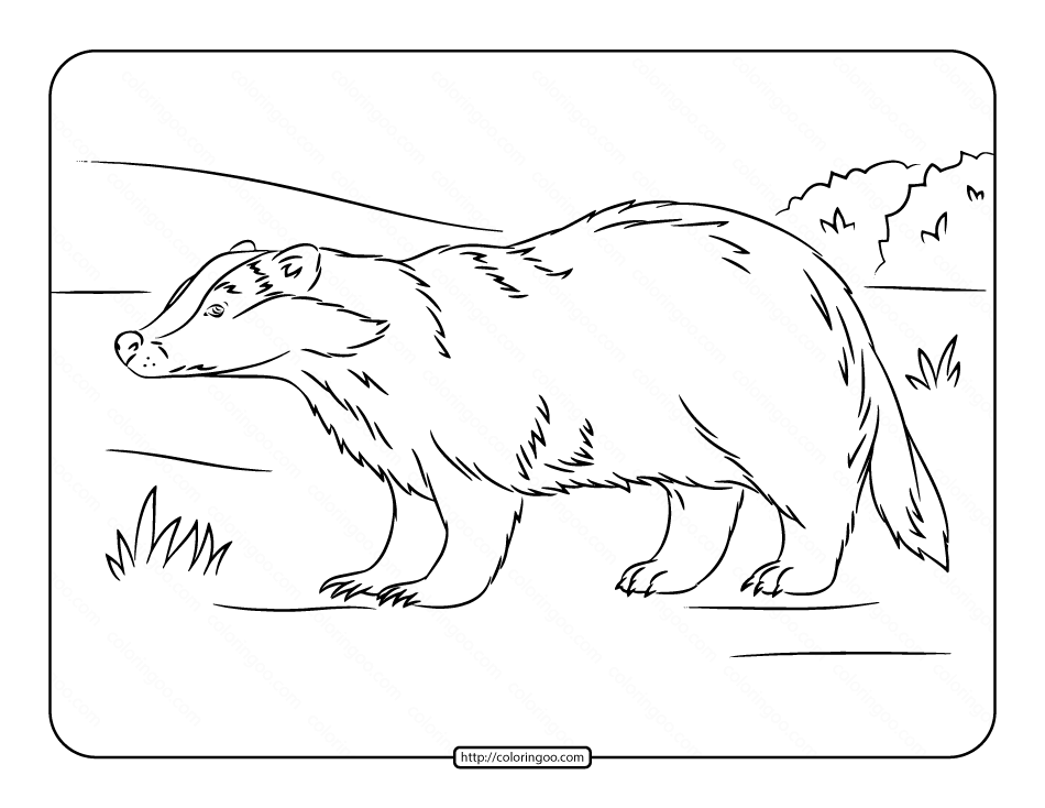 European Badger Coloring Page Coloring Pages Coloring For Kids Coloring Pages For Kids
