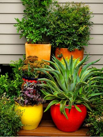 Beautiful potted plants in brightly colored red and yellow pots     Beautiful potted plants in brightly colored red and yellow pots