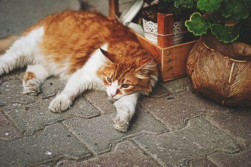 Katzen in Istanbul II