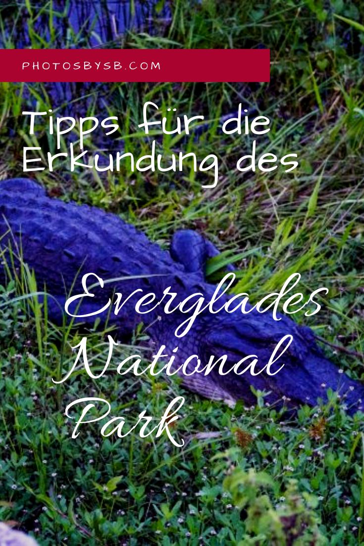 Ein Besuch Im Everglades National Park In 2020 Reisen Usa Reise Tipps