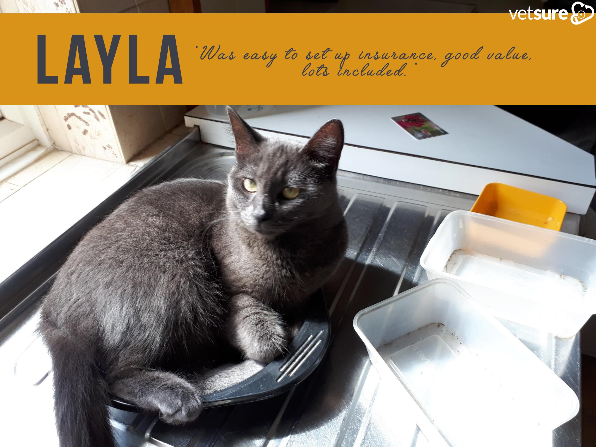 Layla Cat Review Cat insurance, Dog insurance, Cats