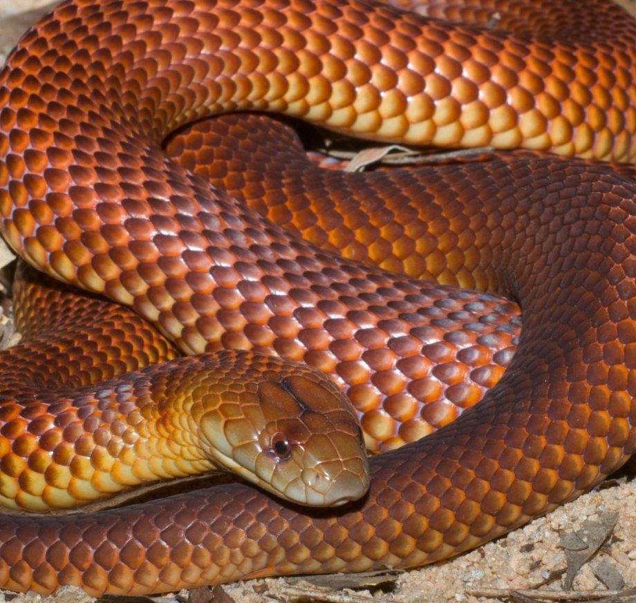 The world's most dangerous snakes (10 Photos) Snake