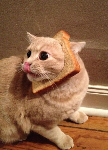 Cute Cats Being Cute Like They Are Everyday 56 Photos