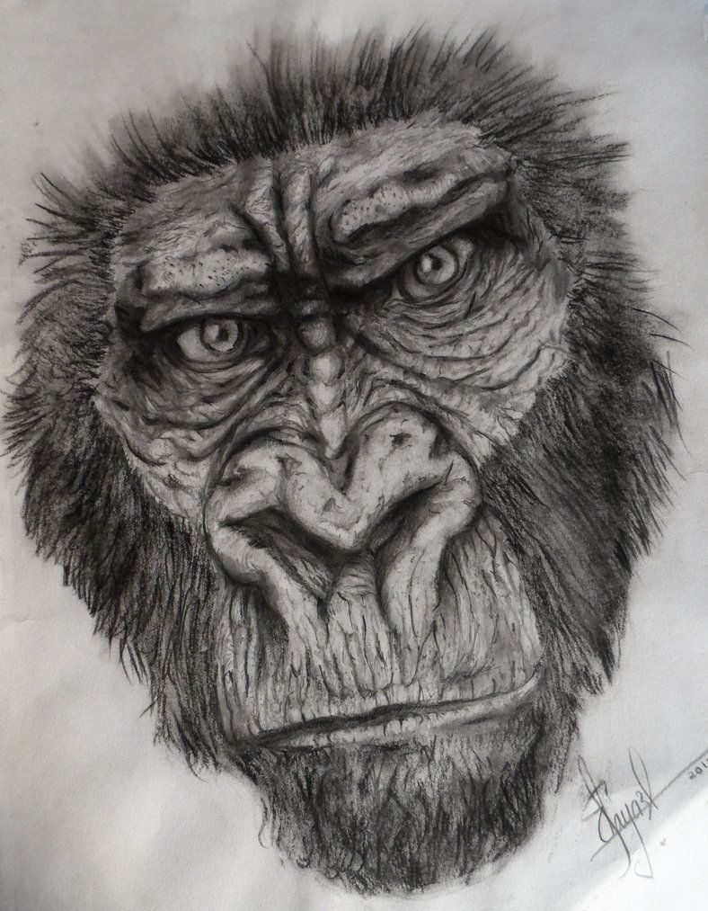 Gorilla sketch drawing gorilla sketch by dr carrot wild life