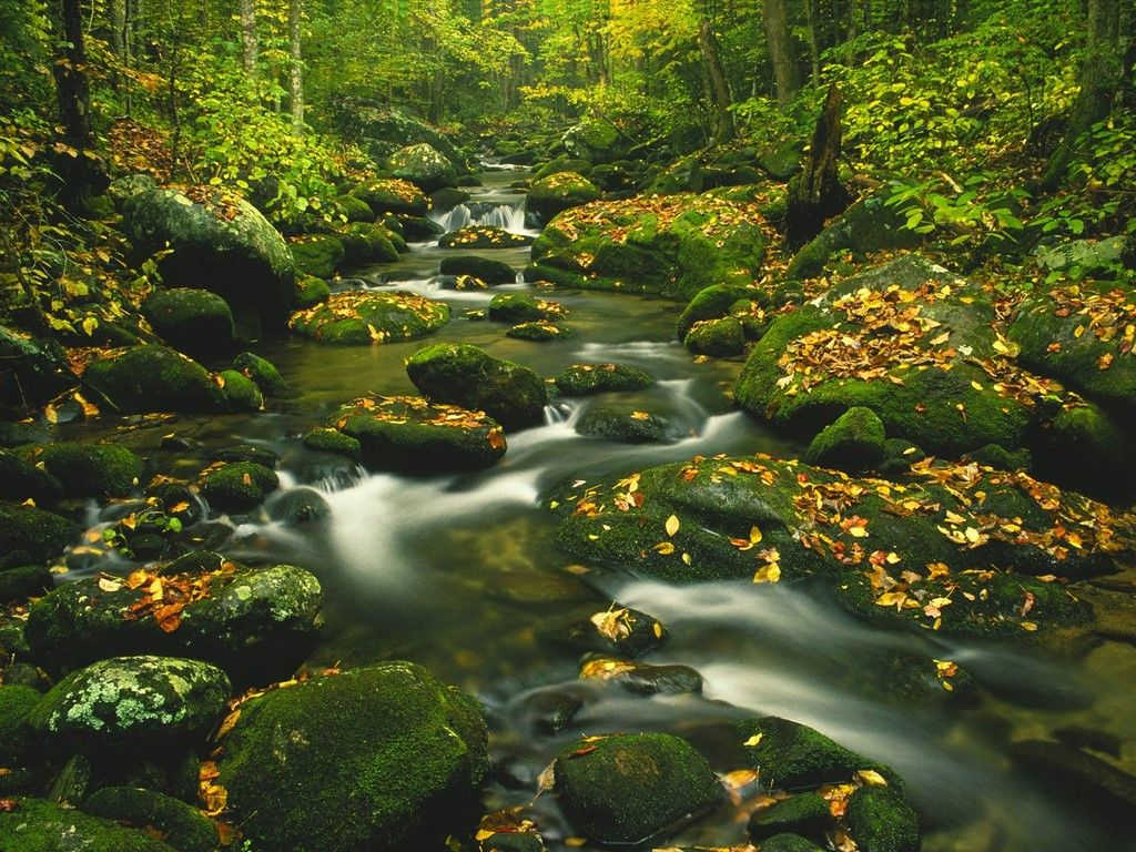 Roaring Fork Great Smoky Mountains Tennessee