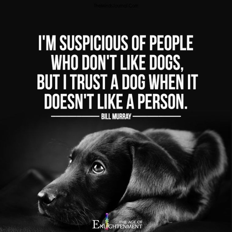 Dogs Can Sense Bad People According To Science Dog People Quotes Dogs Dog Quotes