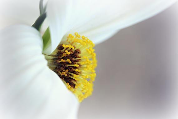 Flower Macro Photography, Digital Download, Nature Lover, Screensaver, Printable Art, Wall Art, Farm