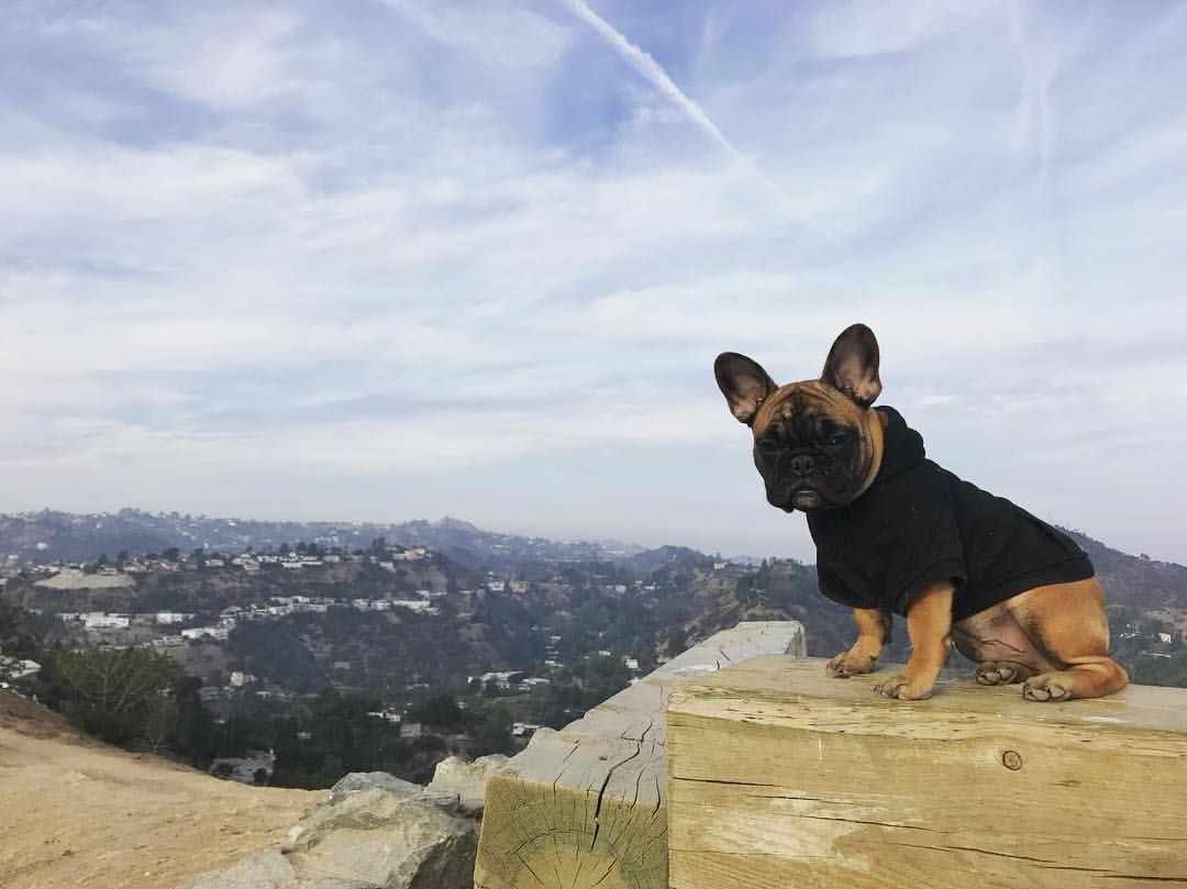 Hiking With Dad In Runyan Canyon La Maui The Frenchie French