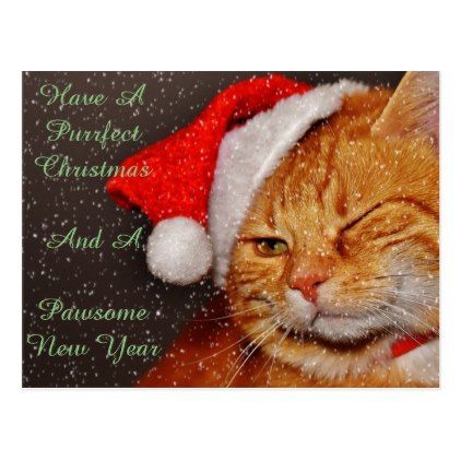 Christmas Cat Postcard Merry Christmas Postcards Postal Family Xmas Card Holidays Diy Personalize Holiday Design Card Christmas Postcard Christmas Cats