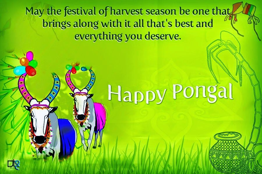 Top Beautiful Happy Pongal FB DP Images for free download