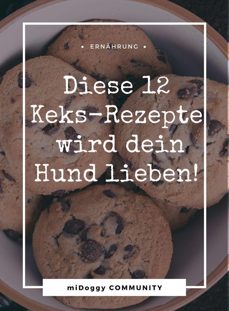 Photo of Hornee galletas para perros usted mismo: 10 + 2 recetas que le encantarán a su perro | comunidad miDoggy
