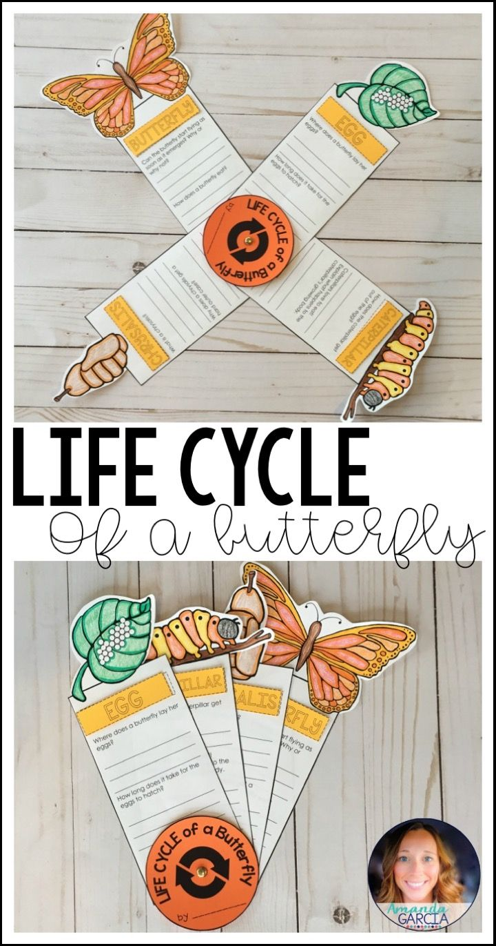 Life Cycle Of A Butterfly Fact Fan Stem Projects Kids