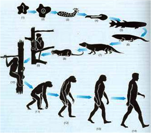 Charles Darwin Y El Origen De Las Especies Evolution Art Human Evolution Human Fossils