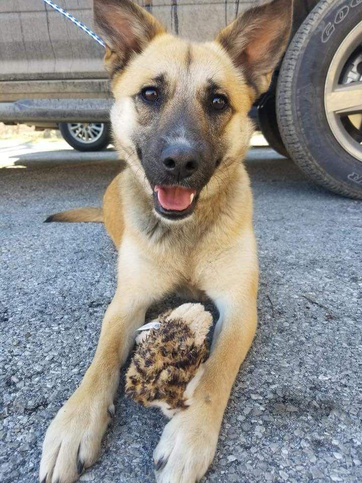 Adopt Sarah on Petfinder Dog search, Paw protection