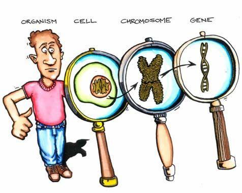 Genetics Laboratory | STEM - Life Science | Pinterest | .tyxgb76aj ...