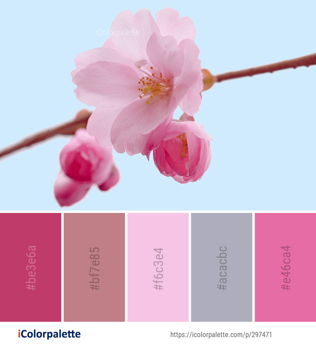 Color Palette Ideas From 1804 Blossom Images Icolorpalette Color Palette Bright Brand Color Palette Pink Color Combination