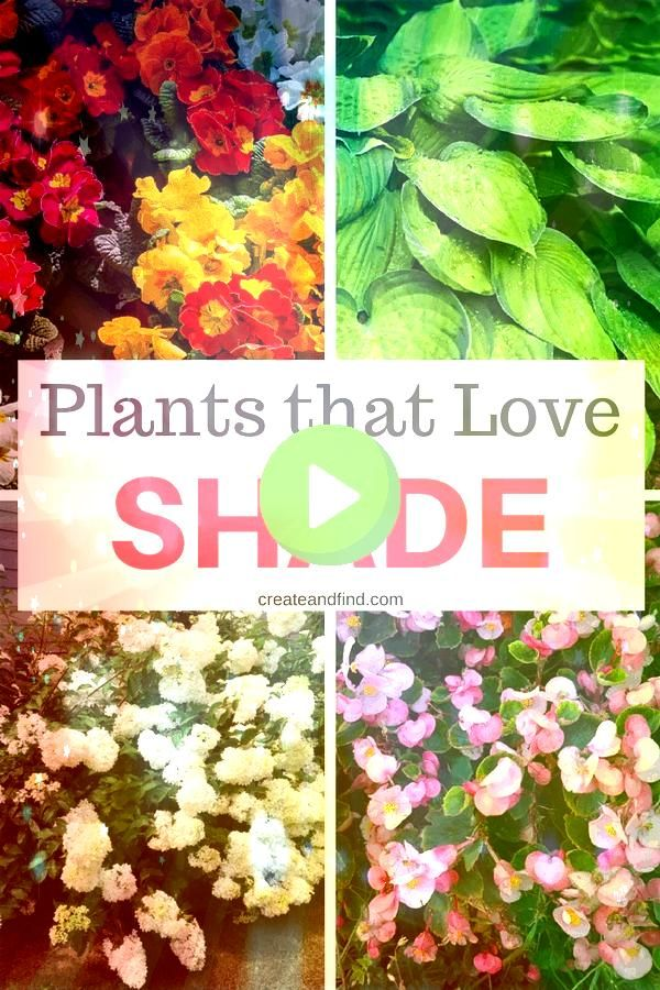 that you need for those shady areas of your yard or garden  10 gorgeous shade loving plants 197454764900143737Plants that you need for those shady areas of your yard or g...