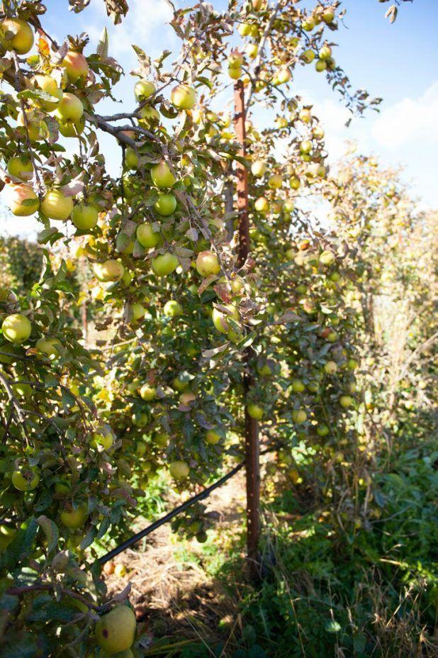 How To Get Fruit Trees To Blossom Fruit Fruit Trees Fruit Fruit Garden