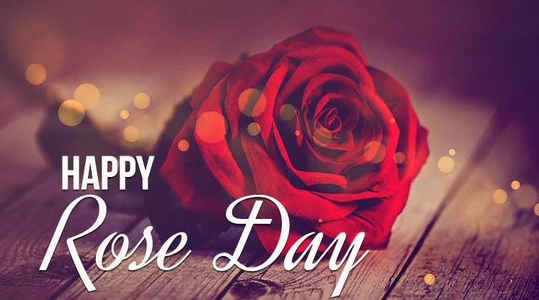 Rose Day Images 2019, Pictures, Wishes and Greetings