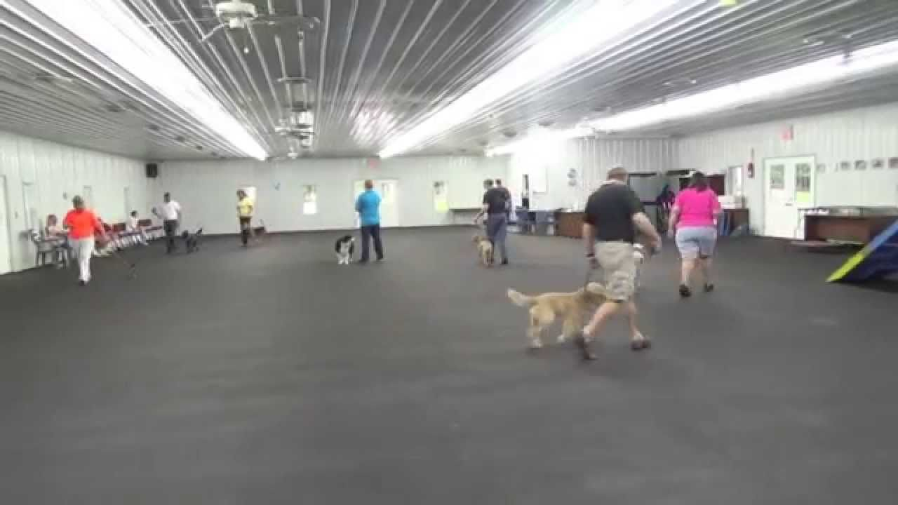 Alden S Kennels Dog Training Dog Boarding Crystal Lake Il Dog