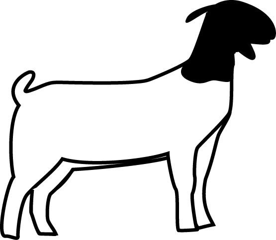 Club Show Lambs Clipart Market Goat Lamb Show Program Animals