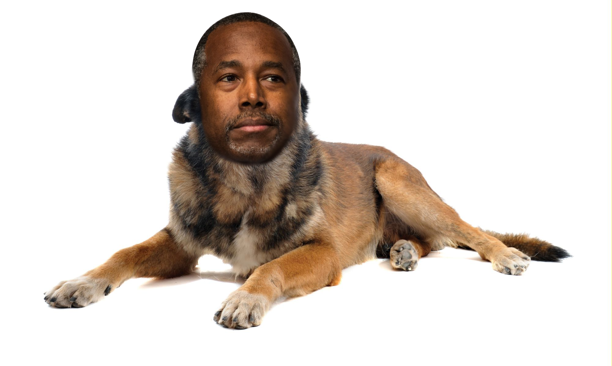 Ben Carson Compared Syrian Refugees To Rabid Dogs This Was My Photoshop Response Personal Protection Dog Dogs Dog Breeds