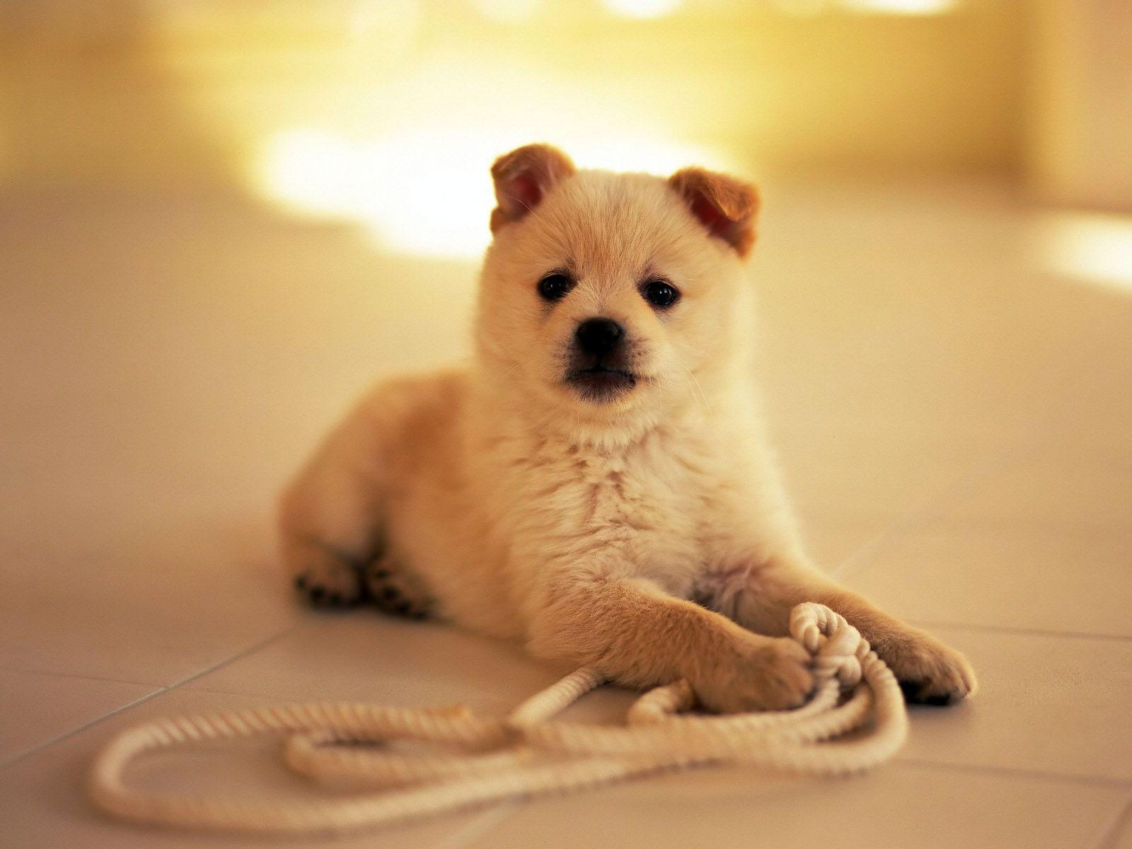 pets | wallpaper menu | cute pets | pinterest | dog, pet rabbit and