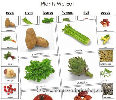 Plants We Eat Montessori Science And Culture Cards Montessori Science Healthy Habits Preschool Montessori