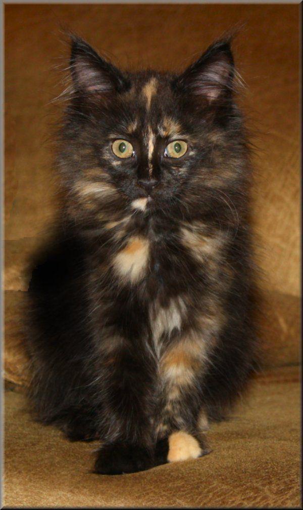 free cat sudbury ontario # 21