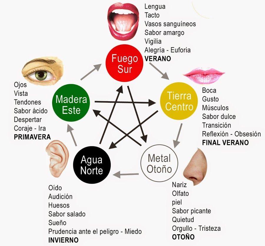 Relación entre los dolores comunes y el desequilibrio de órganos ...