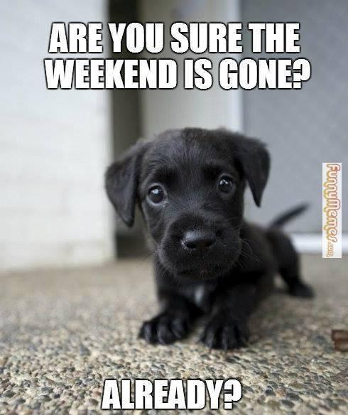 funny dog meme | Cute Animals | Funny dog memes, Dog memes ...