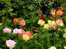 El jardín de rosas en Diseño de Jardines | Rose Garden ...