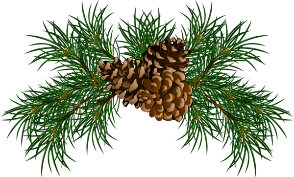 Pine Branches With Pine Cones Png Picture Christmas Pine Cones Pine Cones Christmas Card Crafts