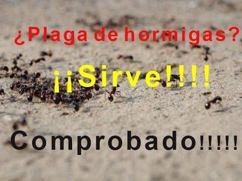 Como Acabar Con Las Hormigas En Mi Cocina Nunca Mas Tendras Hormigas Si Usas Esto Youtube Plaga De