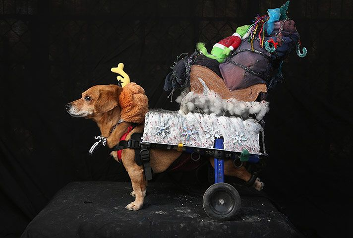 Halloween dog parade in New York \u2013 in pictures
