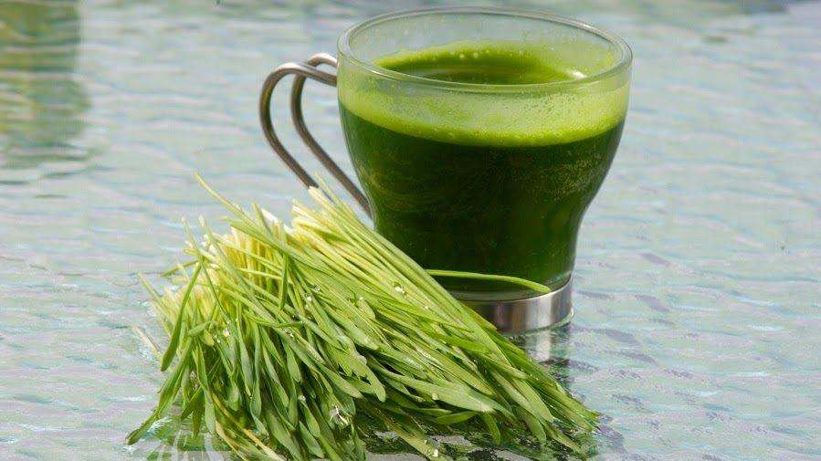 10 Tips para crecer el Wheatgrass (pasto de trigo) en tu cocina. Conoce sus maravillosos beneficios